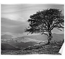 The tree Bilbo left behind looking out to the lonely mountains on a winter's late afternoon. Poster