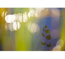 Birch leaves are reflected in a lake Photographic Print