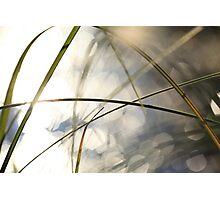 Grasses and sun reflections on a lake Photographic Print