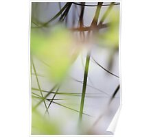 Blades of grass reflected in a quiet lake Poster