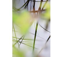 Blades of grass reflected in a quiet lake Photographic Print