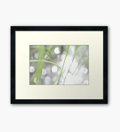 Green grass and sun reflections Framed Print