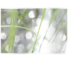 Green grass and sun reflections Poster