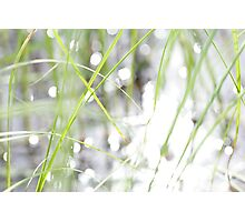 Green grasses and sun reflections on a lake Photographic Print