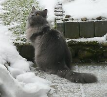 What's this White Stuff? by HandsonHart