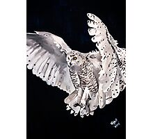 SNOW OWL.... Photographic Print
