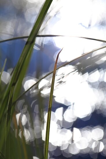 Grasses at the shore of a glittering lake by intensivelight
