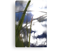 Grasses at the shore of a glittering lake Canvas Print