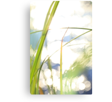 Grasses at the shore of a lake bathing in golden light Canvas Print