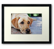 don't let this cute face fool you Framed Print