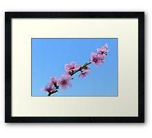 Blossom Photo Framed Print