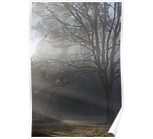 Sun streaming thru mist Poster