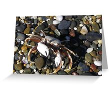 Brightly coloured pebbles & Crab. Arrawarra Beach. N.S.W. Greeting Card