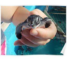 Tiny Turtle 2 Poster