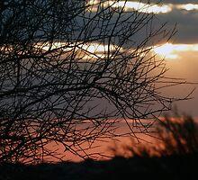 Sunset Shrub by RielTeris