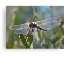 Glass Wings Canvas Print