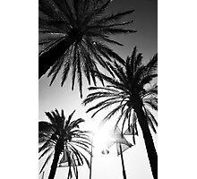 The Three Palm Trees Photographic Print