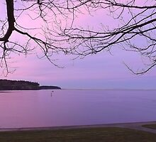 Purple Sunset at the Marina by Moonamie