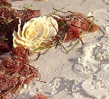 Ocean Rose  by Ellanita