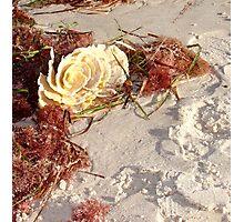 Ocean Rose  Photographic Print