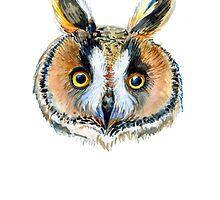 Long-eared owl by Redilion