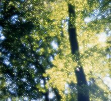 Old beech tree with glowing leaves in spring by intensivelight