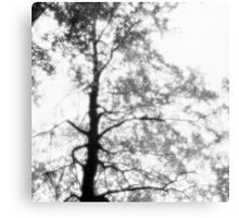 Beech tree with glowing leaves - monochrome Canvas Print