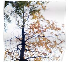 Beech tree with leaves glowing in the autumn sun Poster