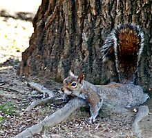 Sleepy Squirrel by Jinx13
