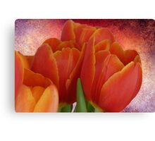 Tulip with Textured Background Canvas Print