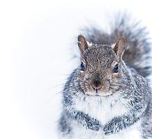 Portrait of a Nutcase by Valerie Rosen