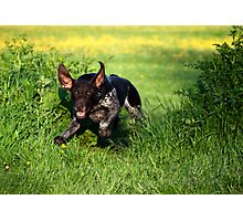 Bat Dog Photographic Print