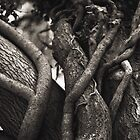 Roots and shoots and skywards grow. by ellylucas