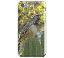 Cactus Wren on Cactus iPhone Case/Skin