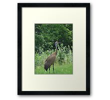 Just a Sand Hill Framed Print