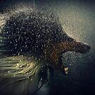 Lycanthropy by Darren Bailey LRPS