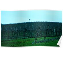 Yamhill Valley Vineyard Poster