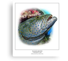 PEACOCK GROUPER Cephalopholis argus ( NOT A PHOTOGRAPH OR PHOTOMANIP) Canvas Print