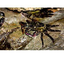 Rock Crab - Beachcomber Series Photographic Print