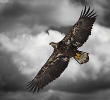 Majestic Juvenile by Thomas Young