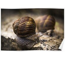 Buda's Snails Poster