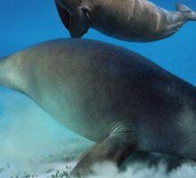 DUGONG (Dugong dugon) DIGITAL PAINTING. NOT A PHOTOGRAPH Sticker