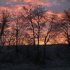Frosty sunset by Lynn Starner