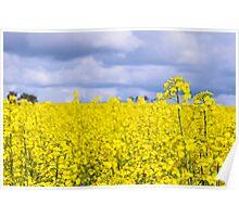Conola Crops, Western Australia Poster