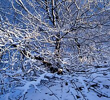 Snow covered beech tree and blue sky by intensivelight