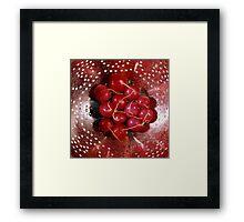Fresh red radishes in a colander Framed Print