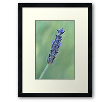 Lavender on muted green Framed Print