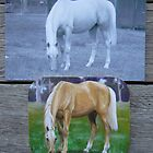 Paris - palomino gelding fridge magnet by louisegreen