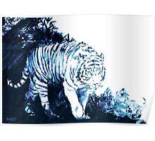White Tigger Poster