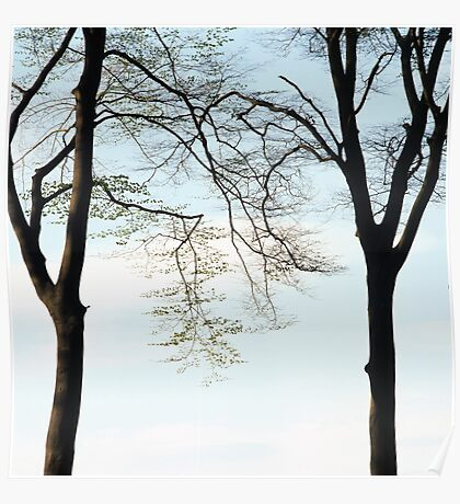 Two beech trees in spring Poster